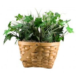 Hidden Plant Camera